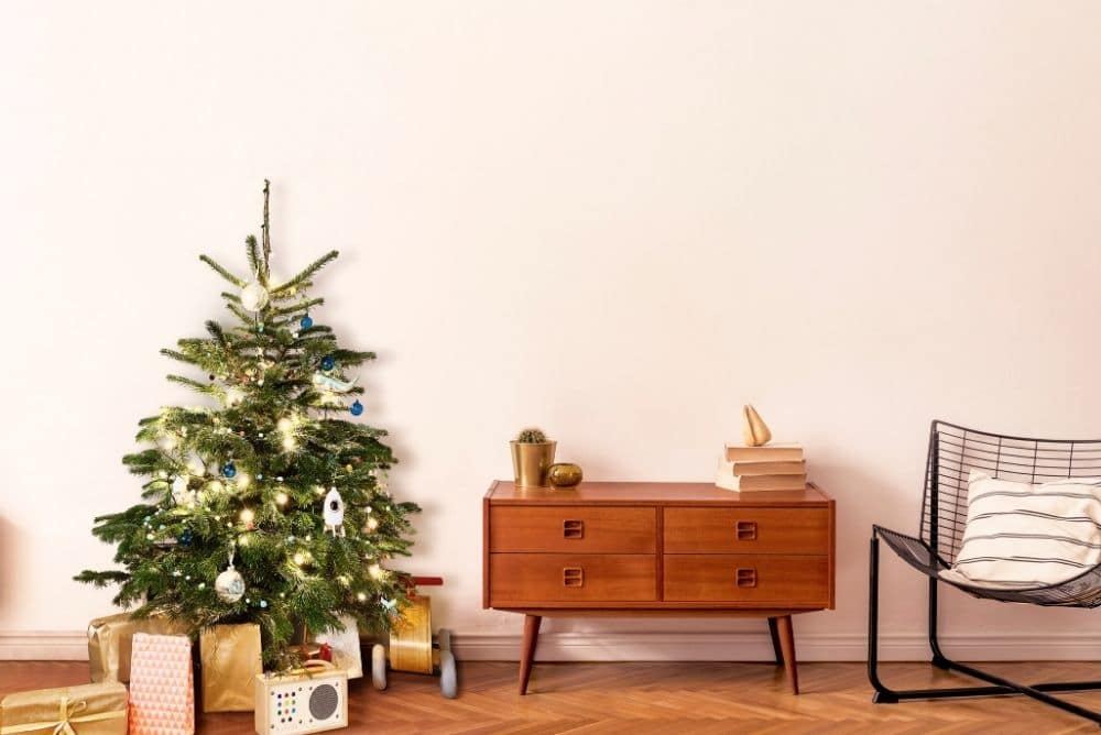 Start-up WunderTree: Die nachhaltige Lösung für Weihnachtsbäume